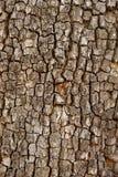 Closeup Of Tree Trunk Stock Photo