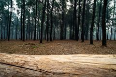 Free Closeup Of Tree Trunk Lying Horizontally On The Ground In The Pine Tree Forest. 1 Stock Image - 143595381
