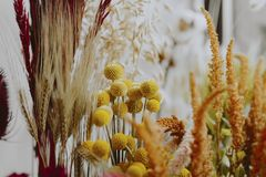 Free Closeup Of Various Dried Yellow Flowers Stock Images - 130168214