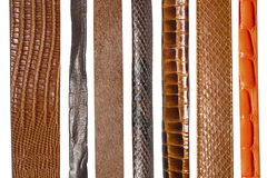 Free Closeup Of Various Leather Belts Stock Photography - 35270192