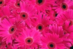 Closeup off flower bouquet. As background Stock Photos