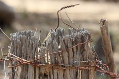 Barbed wire around old fence. Closeup of old and broken natural wood fence post tops wrapped haphazardly in rusted barbed wire Stock Images