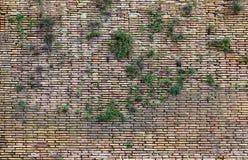 Closeup of Old brown brick wall. Royalty Free Stock Images