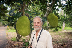Closeup Old Man against Large Jackfruits on Tree in Gargen Royalty Free Stock Images
