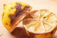 Closeup old rotten lemon Stock Images