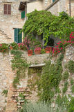 Closeup of the old stone house and plants Royalty Free Stock Images