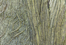Closeup of Old Tree Bark for Textured Background royalty free stock images