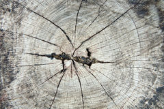 Texture of old tree stump Royalty Free Stock Photo