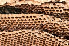 Closeup old wasp honeycomb Stock Image