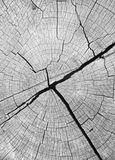 Closeup of old wooden background stock photos