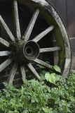Old wooden wagon wheel. Closeup of an old wooden wagon wheel. The spokes of the wheel are rotting and slowly this wheel is being overgrown with weeds Royalty Free Stock Photography