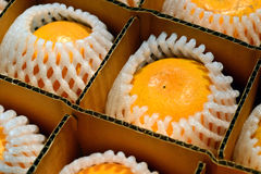 Closeup orange in box Stock Photo