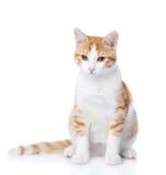 Closeup orange cat looking away. Stock Images