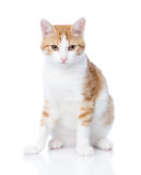 Closeup orange cat looking at camera. Isolated on white backgrou Royalty Free Stock Photos