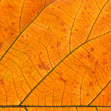Closeup of  orange leaf texture of a plant Stock Images
