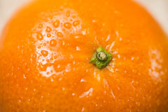 Closeup on an Orange Royalty Free Stock Photo