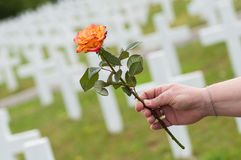 Orange rose in hand of woman at military cemetery. Closeup of orange rose in hand of woman at military cemetery stock photo
