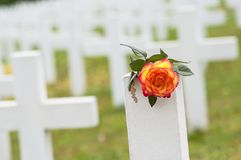 Orange rose on tomb at military cemetery. Closeup of orange rose on tomb at military cemetery stock images