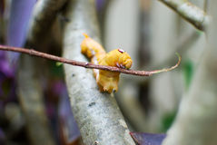 Closeup of orange worm. Caterpillar on a dry branch stock photo