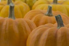 Closeup of orange / yellow pumpkins Royalty Free Stock Photography