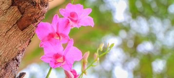 Orchid flowers. Closeup of orchid flower with fresh green nature blurred background at the park Royalty Free Stock Photography
