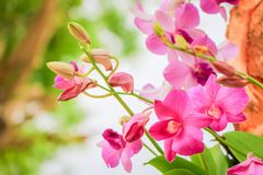 Orchid flowers. Closeup of orchid flower with fresh green nature blurred background at the park Stock Images
