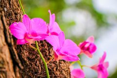 Orchid flowers. Closeup of orchid flower with fresh green nature blurred background at the park Royalty Free Stock Photos