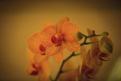Closeup of Orchids flowers in garden. Stock Photography
