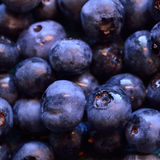 Closeup of organic blueberries, square shape royalty free stock photography