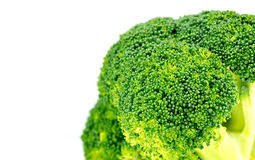 Closeup of organic green broccoli floret with white copyspace Stock Photos