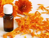 Closeup of organic oil with common marigold on a white background .Medicinal herb. Healthy concept. stock images