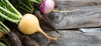 Closeup of organic turnips and black radishes on wood. Closeup of colorful turnips and black radishes for fresh green vegetables with roots on old wood Royalty Free Stock Photo
