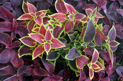 Closeup Ornamental Plants Stock Photo