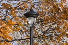 Closeup of ornate black lamp post amidst autumn oak trees with v Stock Photography