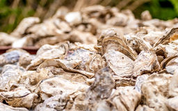 Closeup of oyster shells for diner.  Stock Photography