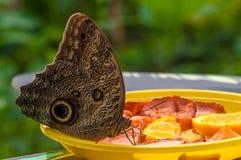 Closeup på tropiskt butterlfy arkivfoton