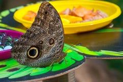 Closeup på tropiskt butterlfy fotografering för bildbyråer
