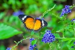 Closeup på tropiskt butterlfy royaltyfri bild