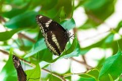 Closeup på tropiskt butterlfy arkivbild