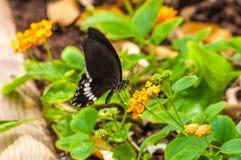 Closeup på tropiskt butterlfy arkivfoto