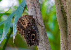 Closeup på tropiskt butterlfy arkivbilder