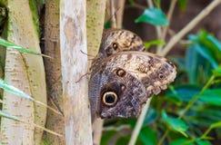 Closeup på tropiskt butterlfy royaltyfri foto