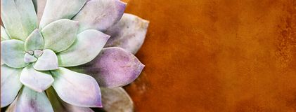 Succulent Cactus Overhead Web Banner Royalty Free Stock Photo