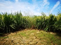 Paddy, also called rice paddy, small, level, flooded field used to cultivate rice in southern and eastern Asia. Closeup a paddy field is a flooded parcel of stock image