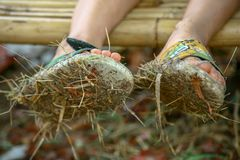 Closeup of pair of dirty sandals full of mud and hay worn by a boy sitting on a bamboo bench. stock photography