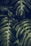 Closeup of palm green leaf Royalty Free Stock Photo
