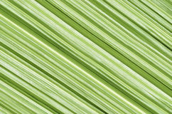 Closeup of palm leaf Stock Image