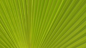 Closeup of palm leaf fluttering on wind stock video footage