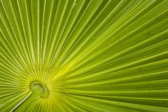 Closeup of palm leaf pattern Stock Images