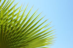 Closeup of palm leaves on blue sky Royalty Free Stock Photos